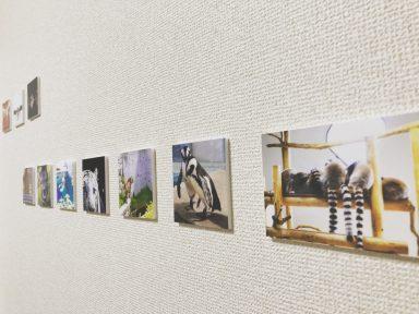 みんなの写真展/2019年1月18日(土)〜2月2日(日)開催|ブックカフェウルム、JR神戸線摂津本山駅、阪急岡本駅